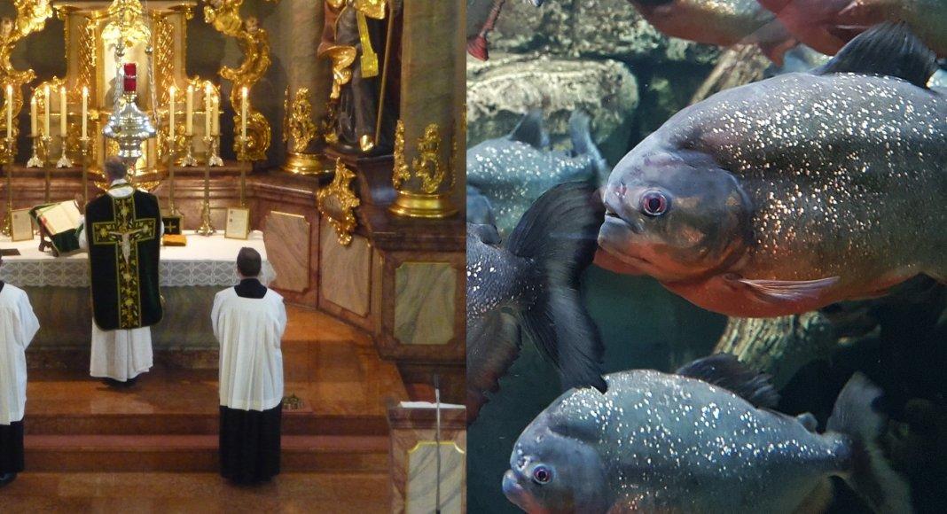 Bild: Piranhas greifen die Alte Messe an